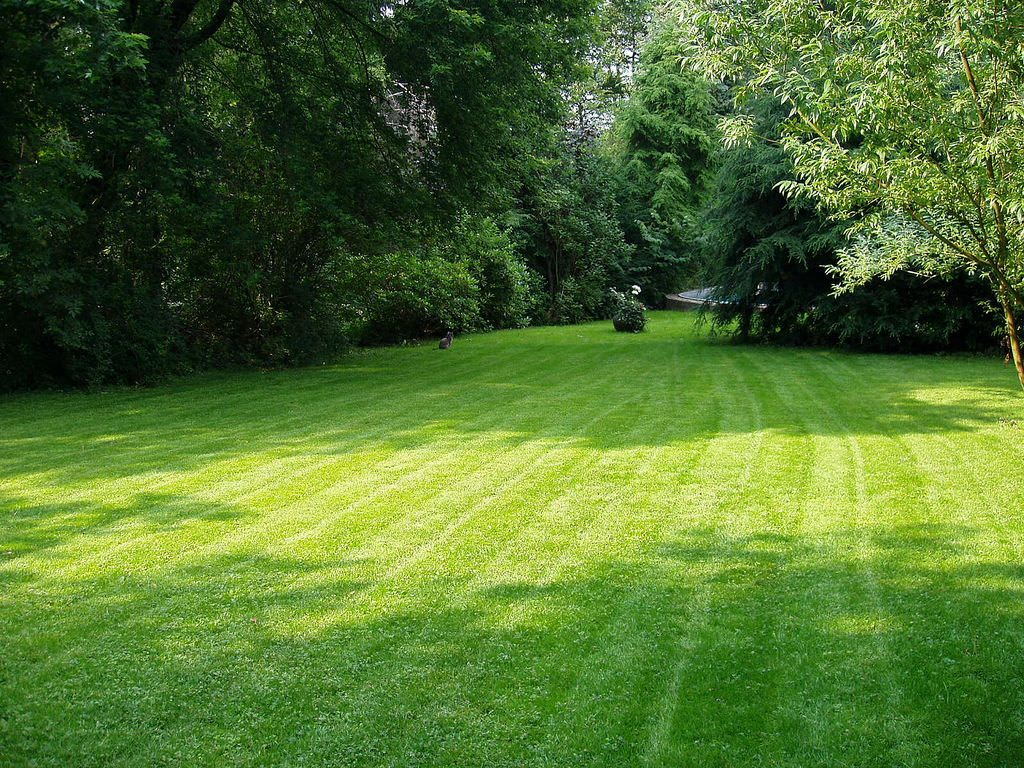 green grass lawn and trees