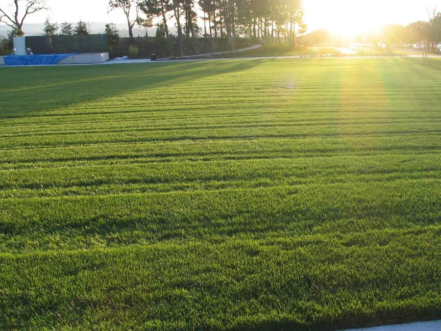 well kept lawn